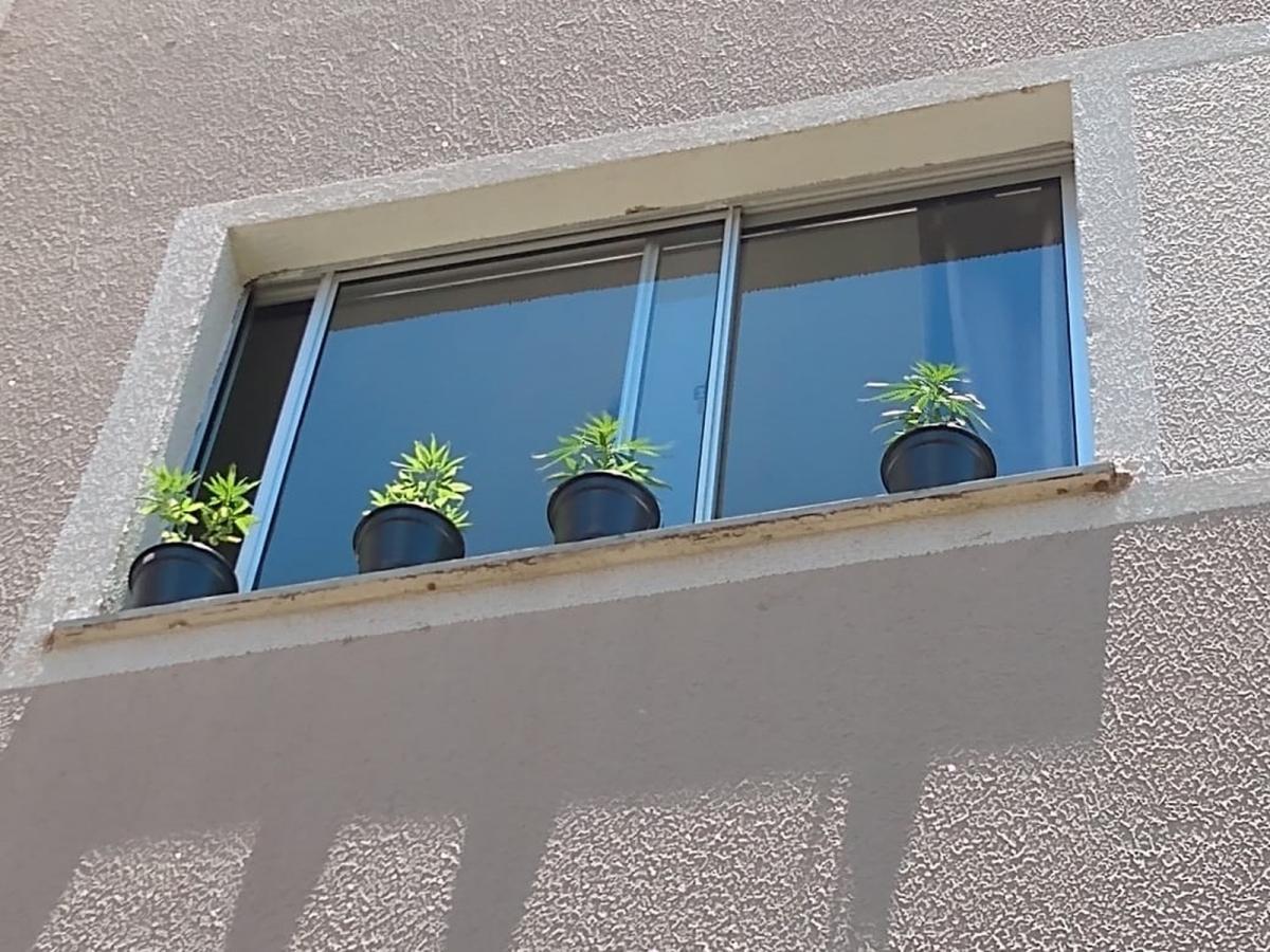 Jovem é presa ao colocar pés de maconha na janela do apartamento