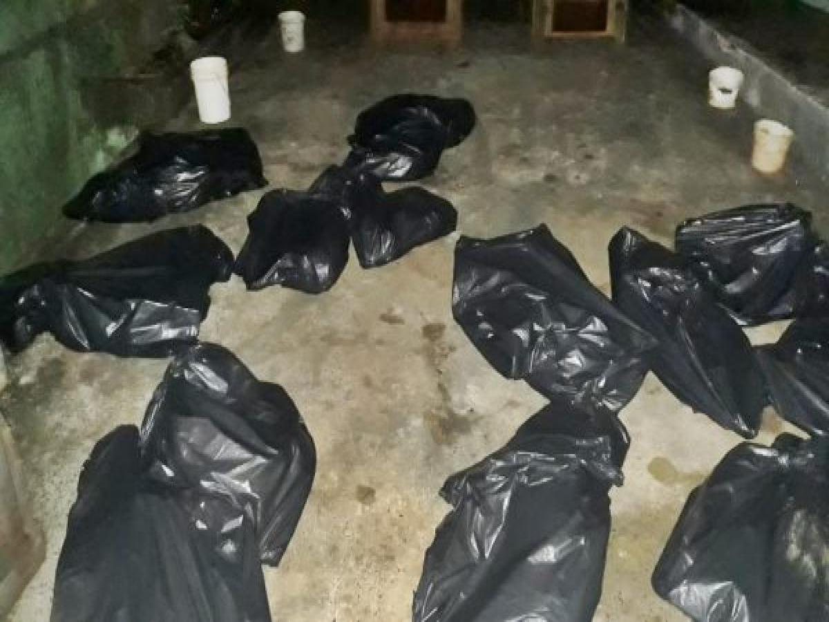 25 cães morrem sufocados em transporte irregular no Paraná