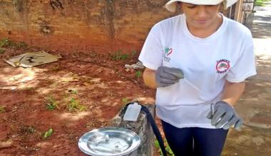 Prefeitura alerta: chuva e calor, a combinação perfeita para o mosquito transmissor da dengue