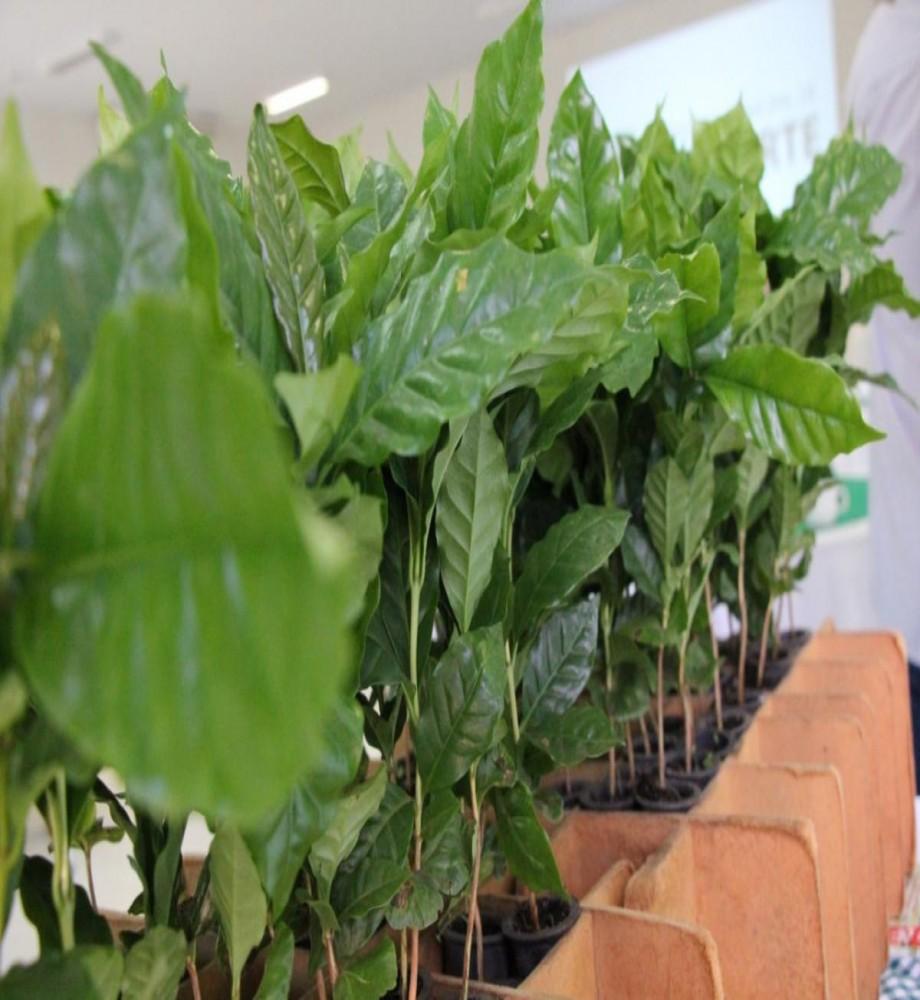 Projeto Luiz Ferraz de Mesquita Filho revitaliza setor cafeeiro em Cianorte