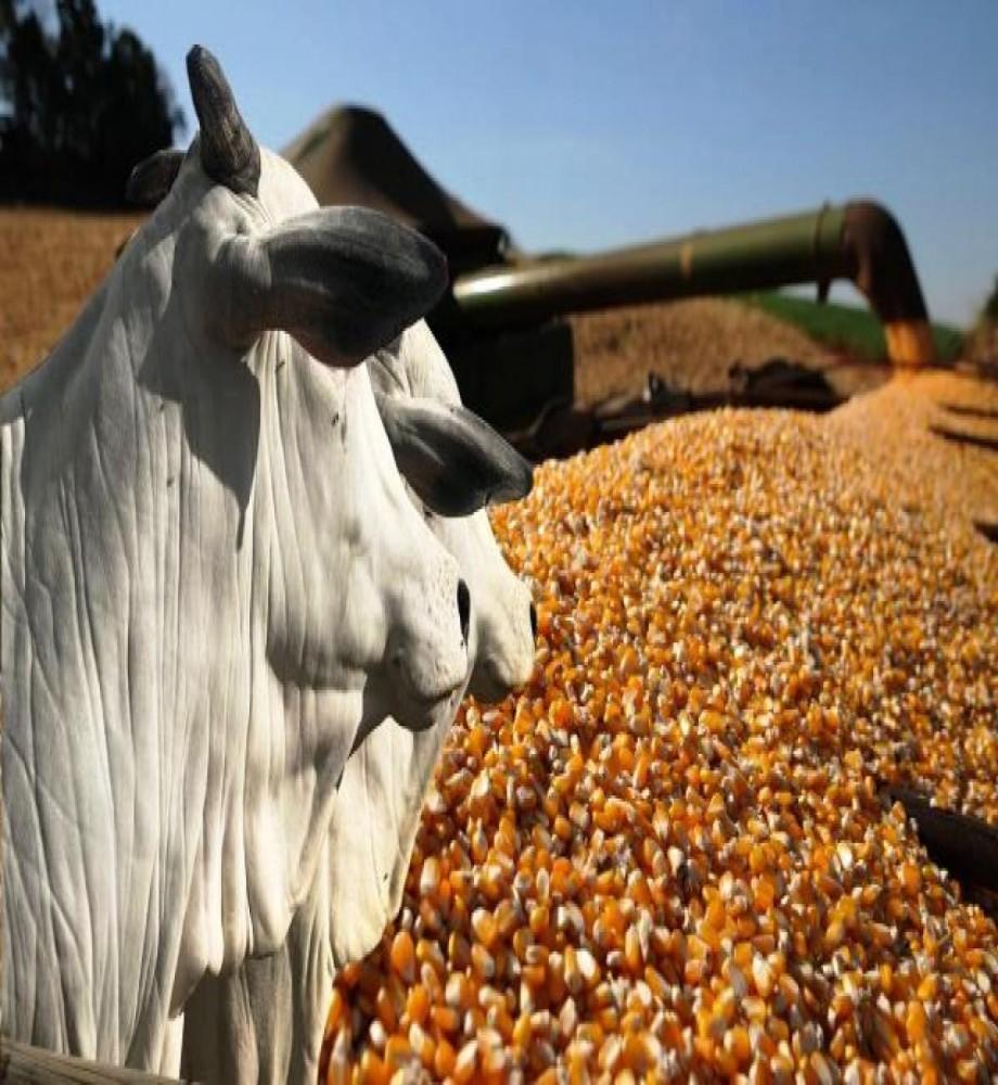 Soja, milho e carne bovina puxam valor da produção agropecuária, que supera R$ 1,1 trilhão este ano